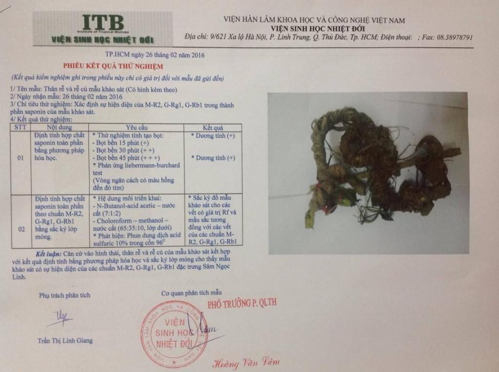 giấy kiểm định chất lượng sâm ngọc linh tại công ty Nguyễn Trần