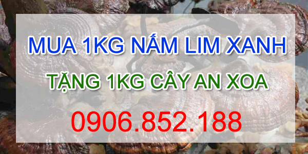 mua 1kg nấm lim xanh tặng 1kg cây an xoa tại công ty Nguyên Trần