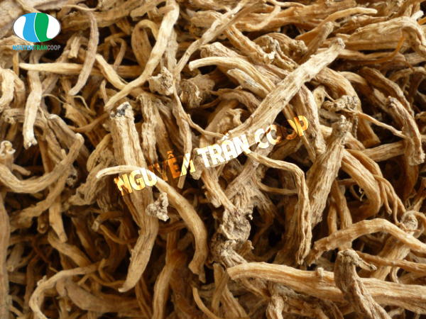 Sâm dây ngọc linh có tác dụng giúp tăng cường thị lực