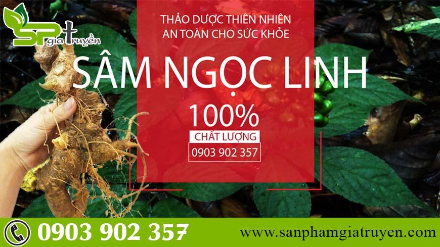 lich-su-phat-hien-sam-ngoc-linh