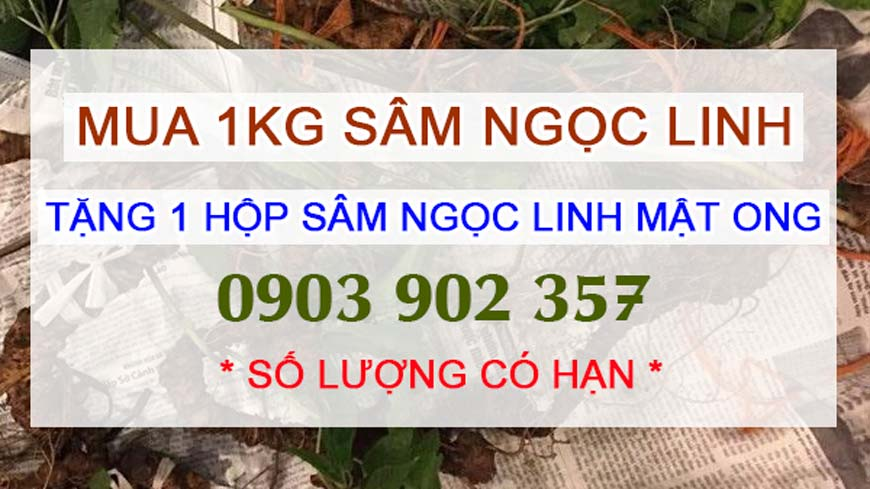 gia-sam-ngoc-linh-cao-nhieu-1kg