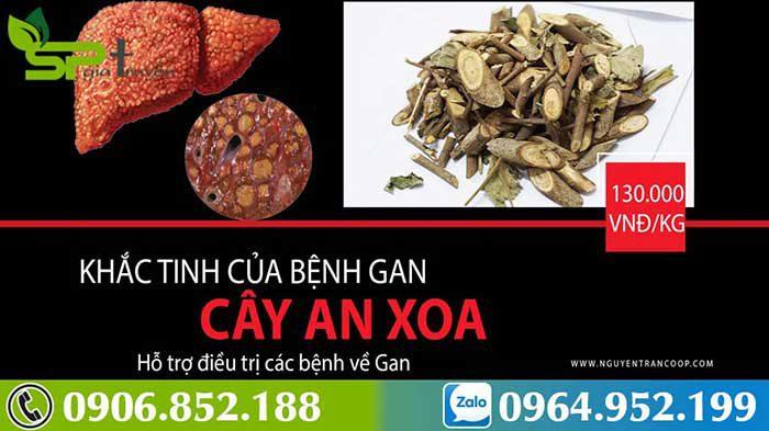 cay-an-xoa-khac-tinh-benh-gan