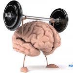 Những Thông Tin Thú Vị Về Bộ Não Của Chúng Ta