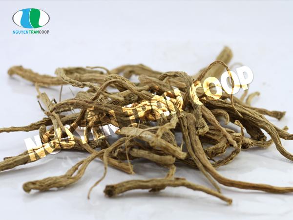 Sâm dây ngọc linh – thảo dược giải nhiệt cực tốt