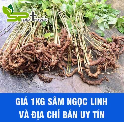 gia-sam-ngoc-linh-bao-nhieu-1kg