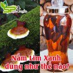 Nấm Lim Xanh dùng như thế nào?