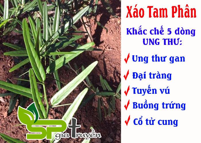 xao-tam-phan-chua-benh-gi-1