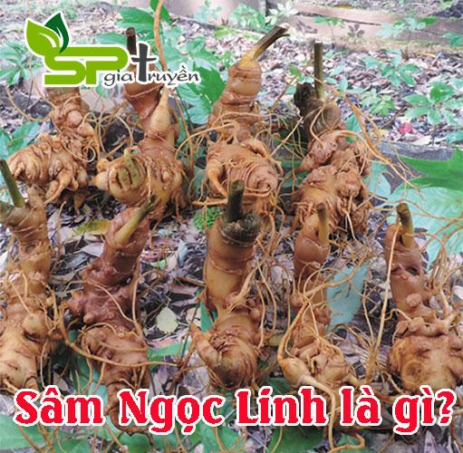 sam-ngoc-linh-la-gi