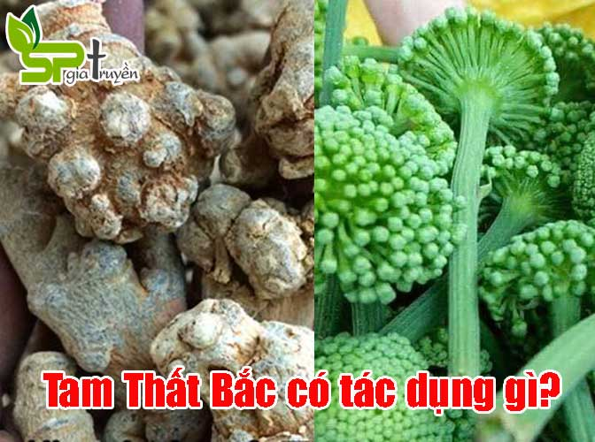 tam-that-bac-co-tac-dung-gi
