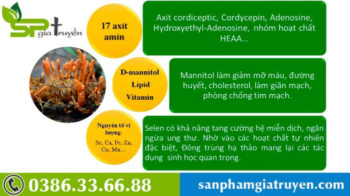 thanh-phan-duoc-chat-dong-trung-ha-thao
