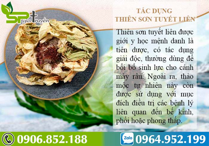 cong-dung-thien-son-tuyet-lien-1