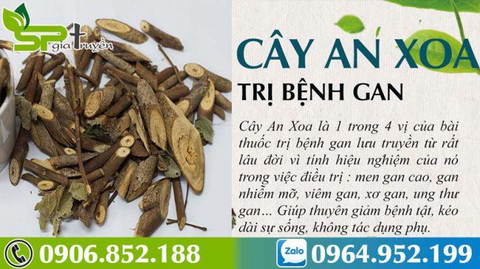 cay-an-xoa-chua-benh-gan-hieu-qua-4