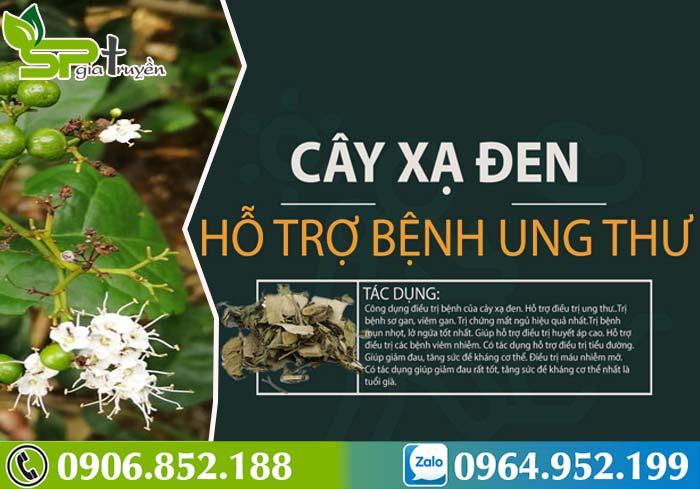 cay-xa-den-chua-benh-gi-1