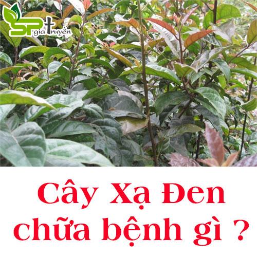 cay-xa-den-chua-benh-gi