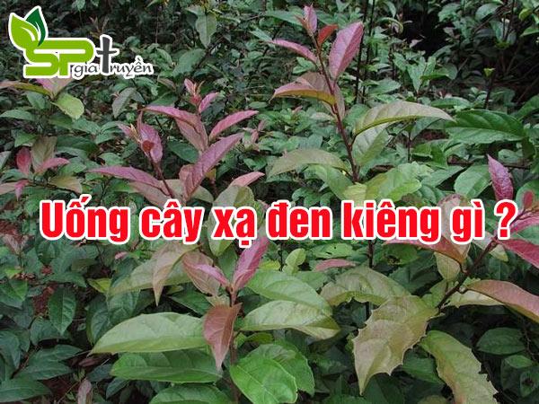 uong-cay-xa-den-kieng-gi