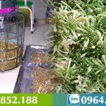 Hoa Đu Đủ Đực ngâm mật ong