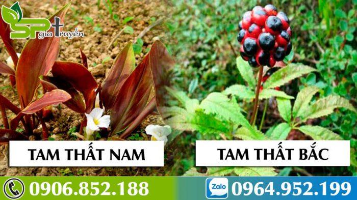 so-sanh-tam-that-bac-voi-tam-that-nam