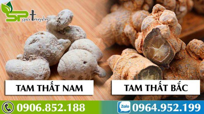 tam-that-bac-voi-tam-that-nam-loai-nao-tot-hon