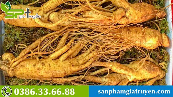 cach-tinh-tuoi-sam-han-quoc-5