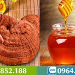 Nấm Linh Chi ngâm mật ong: công dụng và cách ngâm