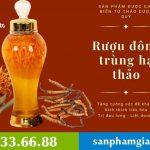 Rượu Đông Trùng Hạ Thảo: Công dụng và cách ngâm