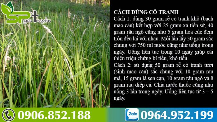 cach-dung-cay-co-tranh