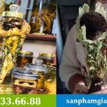 """Hoa sen """"cực hiếm"""" của Tây Tạng – 7 năm mới nở một lần – Thiên Sơn Tuyết Liên"""